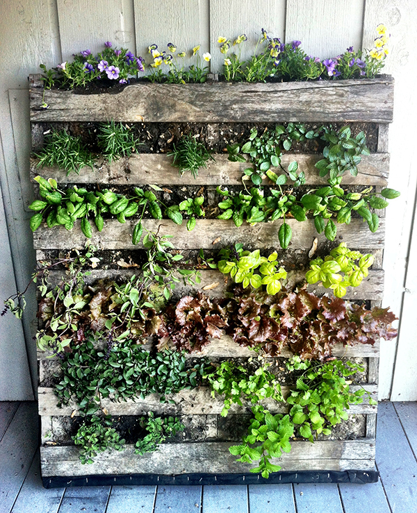 DIY-Pallet-Vegetable-Garden